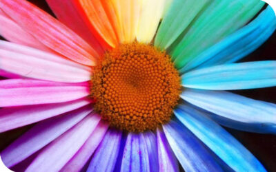 Colour Psychology – understand why colour really can affect how you feel