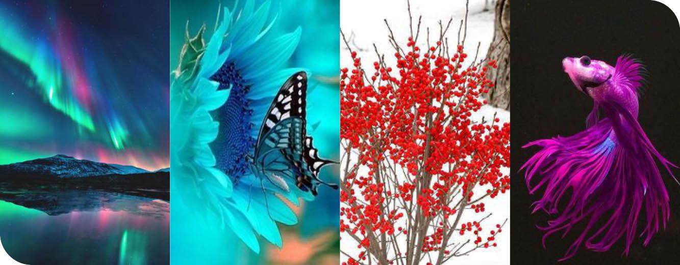 Winter season images